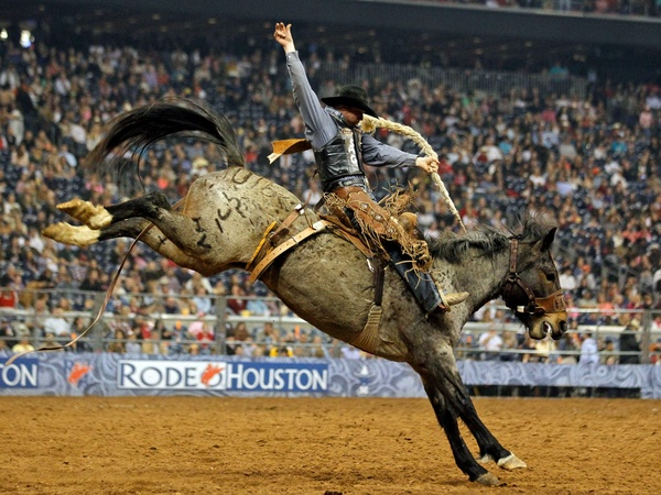 Houston Rodeo Riding Horse