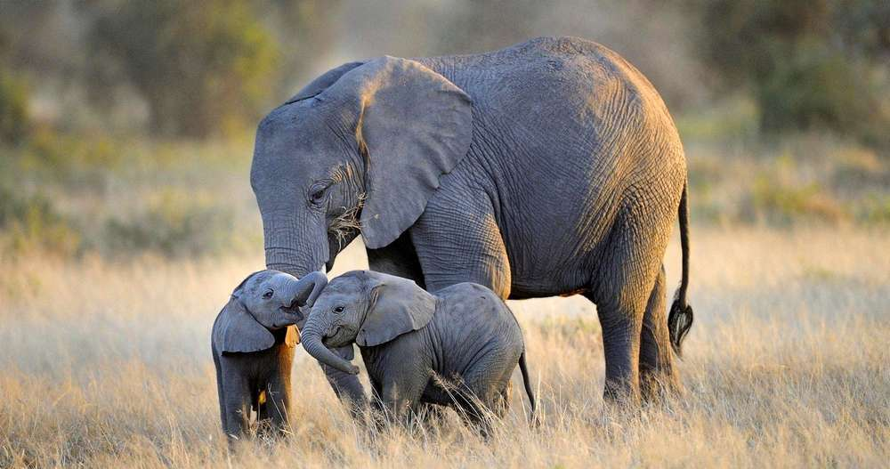 donald trump allows trophy hunters to bring home elephant